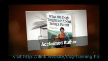 Stop Dog From Barking At Night