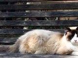 Karla Larsson Kitty Pictures ©Karla K. Larsson