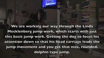 Puppy Jump Work - 8 month old Mudi Pup - Linda Mecklenburg Jump Exercise
