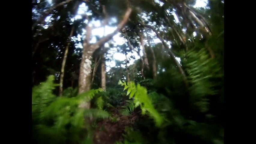 Dodo Trail 2015