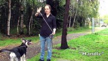Your Dog Isn't the Only One Pulling! Leash Skills for Humans