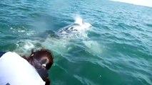 ballena gris San ignacio Baja california sur