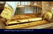 Des abeilles au miel : la Grange aux abeilles