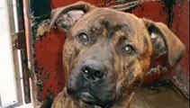Doris Banham Dog Rescue - There is a place and home for every stray dog - somewhere ......