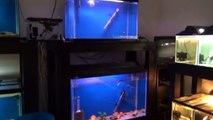 Anchor Island females & Fish room update