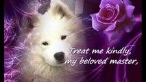 Samoyed A Dogs Prayer by Beth Harris Thru a Samoyed s Eyes
