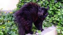 Frightened cat))))