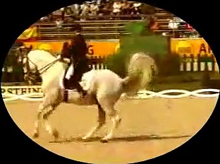 Spanish Stallions–Dressage