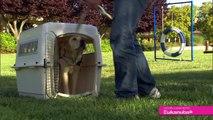 Housetraining: Canine Companions Extraordinary Puppy