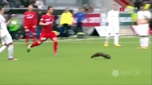 All Football# Funny Football Moments, Football Comedy # Player and Animals on the Pitch