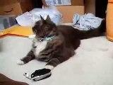 ネコ声の着信音に戸惑いながらも律儀に鳴き返すネコ