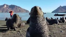Playful fur seal pups ham it up for the camera