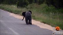 Bébé éléphant vs Oiseaux - Trop mignon