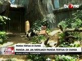 Panda Jia Jia jadi Panda Tertua di Dunia