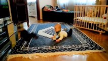 Funny Cats and Babies Video LOL Cute Funny Animals Fails Compilation Funny Baby Cats 2015 HD 720p