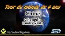 Chine │Voyage Tour Du Monde ► Chengdu, Panda Géant et Panda Roux