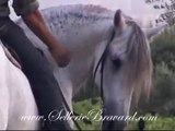 Sellerie Bravard. dressage obstacle rando équitation américaine.cuers var 83mpg