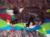 hommage à  mon chat,mon ange Minka