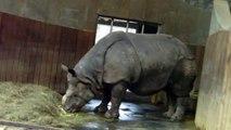 Faultier und Nashorn - Slothes and Rhinos - Munich Zoo - Tierpark Hellabrunn