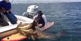 Paddleboarding Fisherman Snags Giant Fish