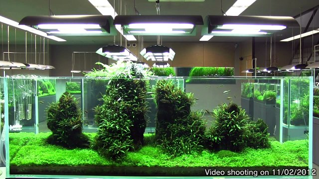 [ADA view 336] Follow-up video of NA Gallery aquariums.