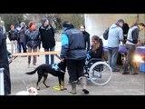 Hartiste, chienne d'assistance, court métrage par Histoires de Chiens