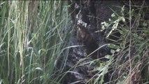 Relaxing Nature Sounds & Video [HD] - Binaural Meditation - rain w/o music - ReWake