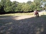 Cheval monté sans bride, liberté, au galop et à l'obstacle