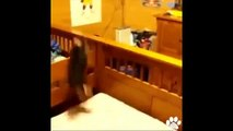 Best Dog Vines August 2014   Compilation of Funny Puppy and Dog Vines!