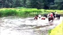 Ruiterkamp 1420 Juli Boschhoeve   Zwemmen met de paarden! Low