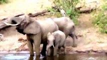 Travel Wild animal ,  Visit Wild animal ,  Wild Animal Crocodile ,  Wild Animal Video Crocodile ,  Wild