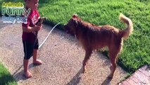Pets and Cute Babies Having Bath Together Compilation June 2015 Funny Animals Baby Dog