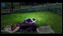 Funny Videos - Funny Cat - Funny Dog  - Funny Dog Videos - Funny Cats Videos - Funny Cats and Dogs