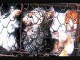 Cat And Dog Fur Farming.. Crawling In Their Skin