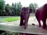 Dancing Elephants - Baby Elephant Walk 2010