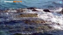 Dusty le dauphin qui fait flipper l'Irlande