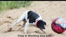 Freja in Working Dog Ball - Epic ball playing dog