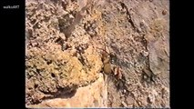 Mallorca Insektenwelt (2000) - Spinnen, Ameisen, Wespen / insect world -spiders, ants, wasps