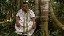 Maestro Jorge - Ayahuasca Retreats at the Temple of the Way of Light
