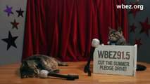 NPR's Steve Inskeep and Bill O'Reilly. Starring Cats.