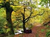 Paisajes de España. Asturias/ Landscapes of Spain. Asturias/ Paisaxes d'España. Asturies