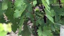 Les vins du château Margaux - Bordeaux - Millésima