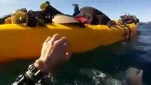 Kayak vs Baleine