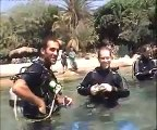 Diving with dolphins in the Red Sea, Eilat