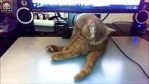Lustige Katzen Schlafen in Seltsamen Positionen (Zusammenstellung 2015) - Lustige Tiere [HD]