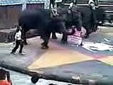 Funny Elephants Dancing at Taman Safari Indonesia Funny Animals Video