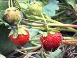 Знайомтесь - мій органічний город! Природне землеробство. Органічне землеробство.