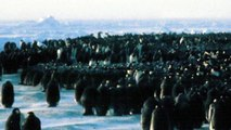Science in Action: Penguin Wave | California Academy of Sciences