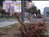 Arboricidio en la Av. Arenales