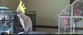Funny Dog Videos - Funny Animals Videos Try Not To Laugh 2015   AnimalsDumpTV